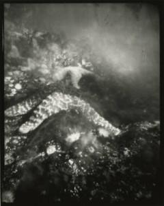 Starfish in Tidal Pool
