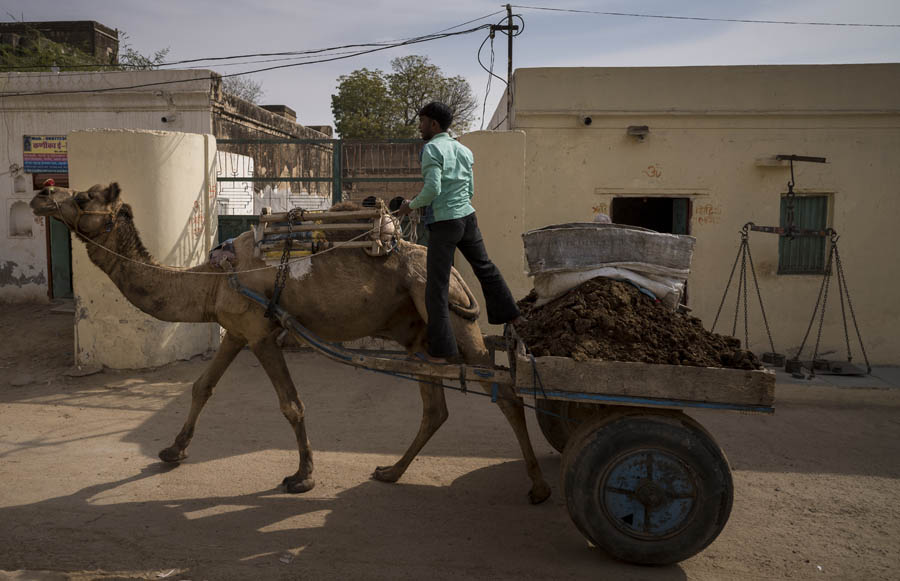 Draft Camel