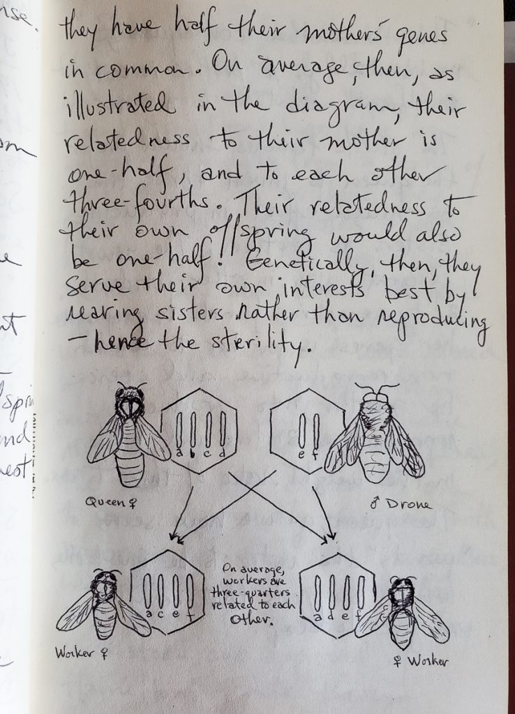 Page From My Early Notebooks on Hamilton & Trivers Altruism Studies
